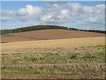 NT9058 : Millerton Hill by Richard Webb