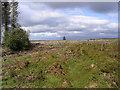 NY5686 : Glendhu Hill by Walter Baxter