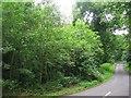 NU2004 : Woodland Drive by Alison Rawson