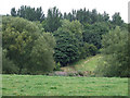 SJ8156 : Grazing Land and Woodland near Alsager, Cheshire by Roger  Kidd