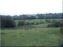 SN0210 : Farmland near Weston Lane Farm by David Medcalf