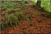 J3996 : Autumn leaves, Glenoe glen by Albert Bridge