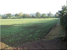 SJ6836 : Farmland near Betton by Peter Fleming