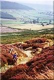 NZ5202 : Descent from Carlton Moor by Graham Horn