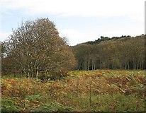 NT6281 : Brownrig Wood by Richard Webb