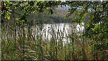 SK4663 : Fishing pond by Alan Walker