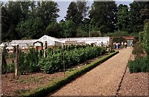 SU3370 : Greenhouse in the Victorian Kitchen Garden by Adrian Cable
