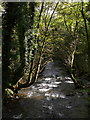 SX3077 : River Inny near Trefrize Mill by Derek Harper