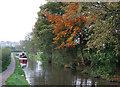 SJ9151 : Caldon Canal below Stockton Brook, Staffordshire by Roger  Kidd