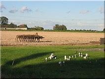 TF3324 : Farmland in Whaplode by Pip Rolls