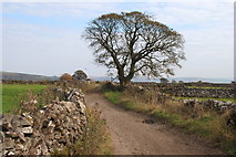 SK2076 : Tideswell Lane by Roger Temple
