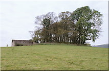 SK2076 : Copse above Eyam View Farm by Roger Temple