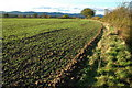 SO8434 : Winter cereals at Buckbury by Philip Halling