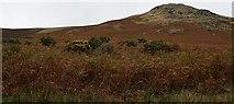 NY4714 : Flowering Gorse by Steve Partridge
