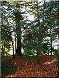 SK2957 : Woodland scene - Willersley Castle by J147