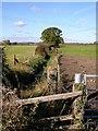 SP4475 : Church Lawford-Limestone Hall Lane by Ian Rob