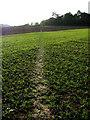 TG3234 : Footpath across fields (2) by Evelyn Simak