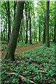 TF0802 : Bushey Wood, near Southorpe by Julian Dowse