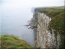 TA1974 : Chalk cliffs at Bempton by Maigheach-gheal