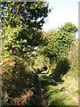 TF9518 : Folly Lane by Evelyn Simak