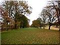 NZ1758 : Avenue of Trees, Gibside by Bill Henderson
