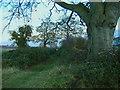 TA0036 : Beverley 20 footpath near Walkington by Paul Harrop