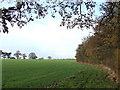 SO6786 : Shropshire Cropfields, Overton by Roger  Kidd