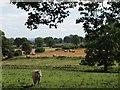 NZ0269 : Farmland near South Clarewood by Mike Quinn