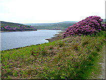 SD9633 : Walshaw Dean Middle Reservoir by George Tod