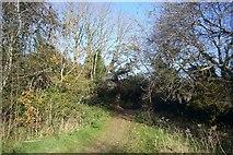 SX5656 : Footpath in Langage by Nigel Mole