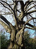 NZ0516 : An old tree by michael ely