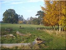 SO6437 : Putley Court parkland by Trevor Rickard