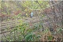 SX5656 : Railway milepost on Hemerdon Bank by Nigel Mole