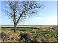 TF3686 : Footpath to Legbourne by Dave Hitchborne