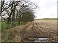 NS9639 : Line of beeches, Meadowflatts by Richard Webb