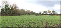 T2169 : County Wexford pasture land by Jonathan Billinger