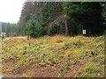 NN8161 : Waymarked forest path by Rob Burke