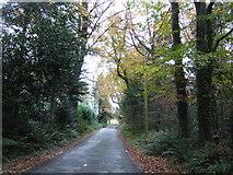 T0430 : Wooded road to Killelan by Jonathan Billinger