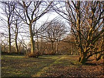 SE1322 : Strip of woodland off Reins Wood, Rastrick by Humphrey Bolton