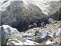 NM7030 : Otter in Loch Spelve by Ben Dallimore