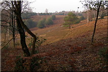 SU2609 : Acres Down, New Forest by Jim Champion