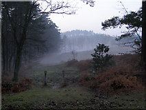 SU2609 : Edge of Highland Water Inclosure, New Forest by Jim Champion