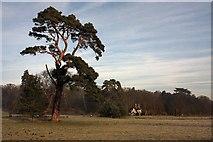 TL8162 : Ickworth Park by Bob Jones