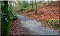 J3996 : Path to Glenoe Glen by Albert Bridge