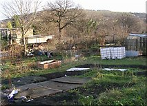 SE1437 : Allotments - Otley Road by Betty Longbottom