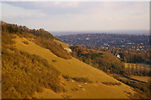 TQ2452 : Scarp slope of Colley Hill by Ian Capper