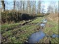 SO7943 : Track through Blackmore Wood by Trevor Rickard