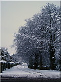 J3271 : Snow in Belfast [8] by Rossographer
