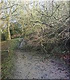 SE2768 : Path Obstruction by Matthew Hatton