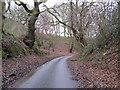 SJ5927 : Between the Trees by Paul Beaman